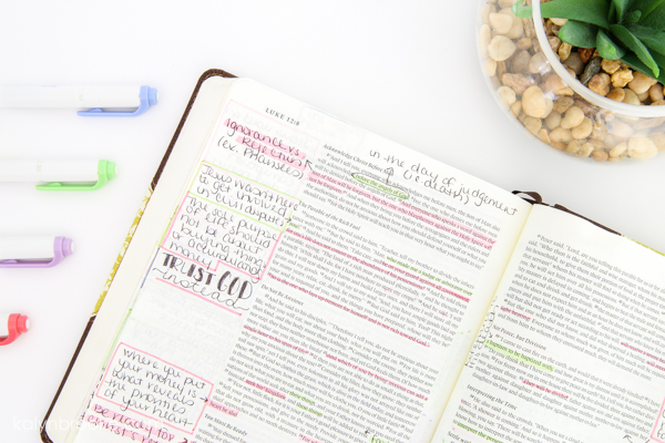 open Bible, pens, and plant